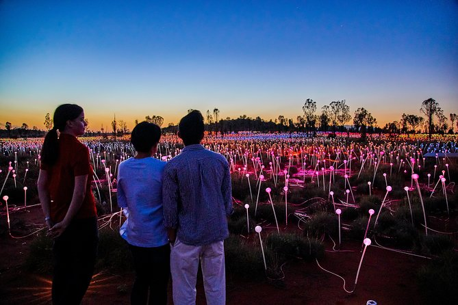 Uluru Field of Light Sunrise Tour - Accommodation Noosa