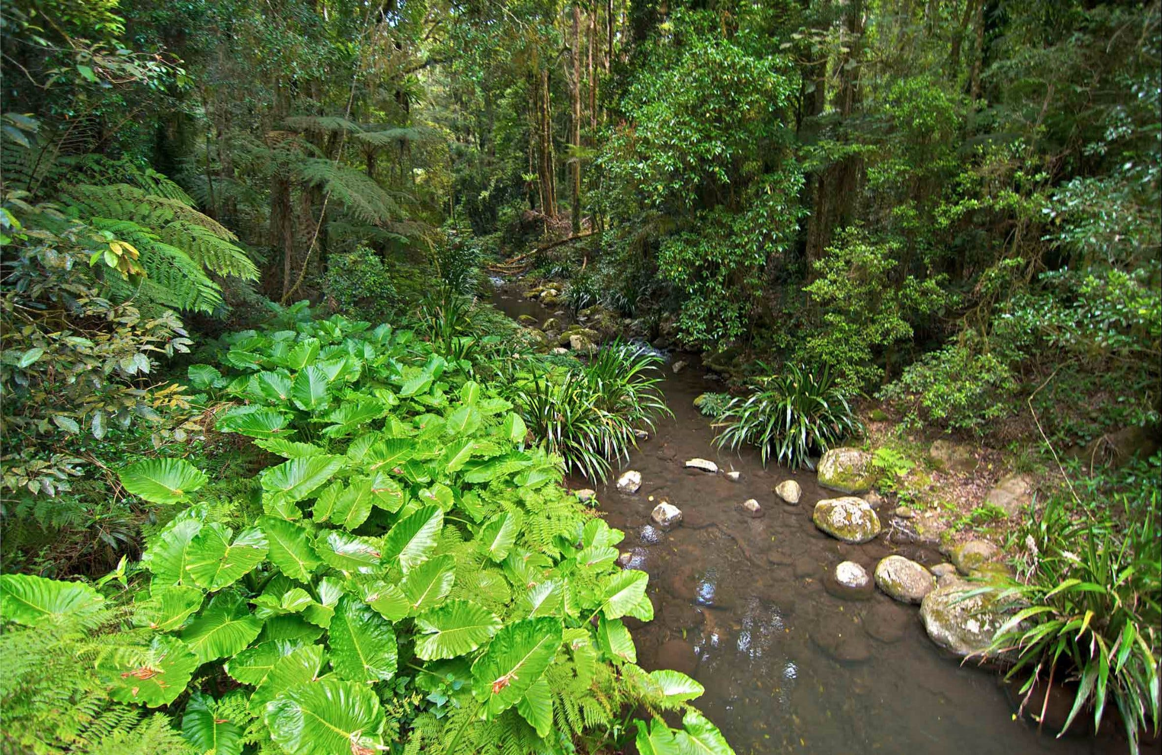 Brindle Creek Walking Track - Accommodation Noosa
