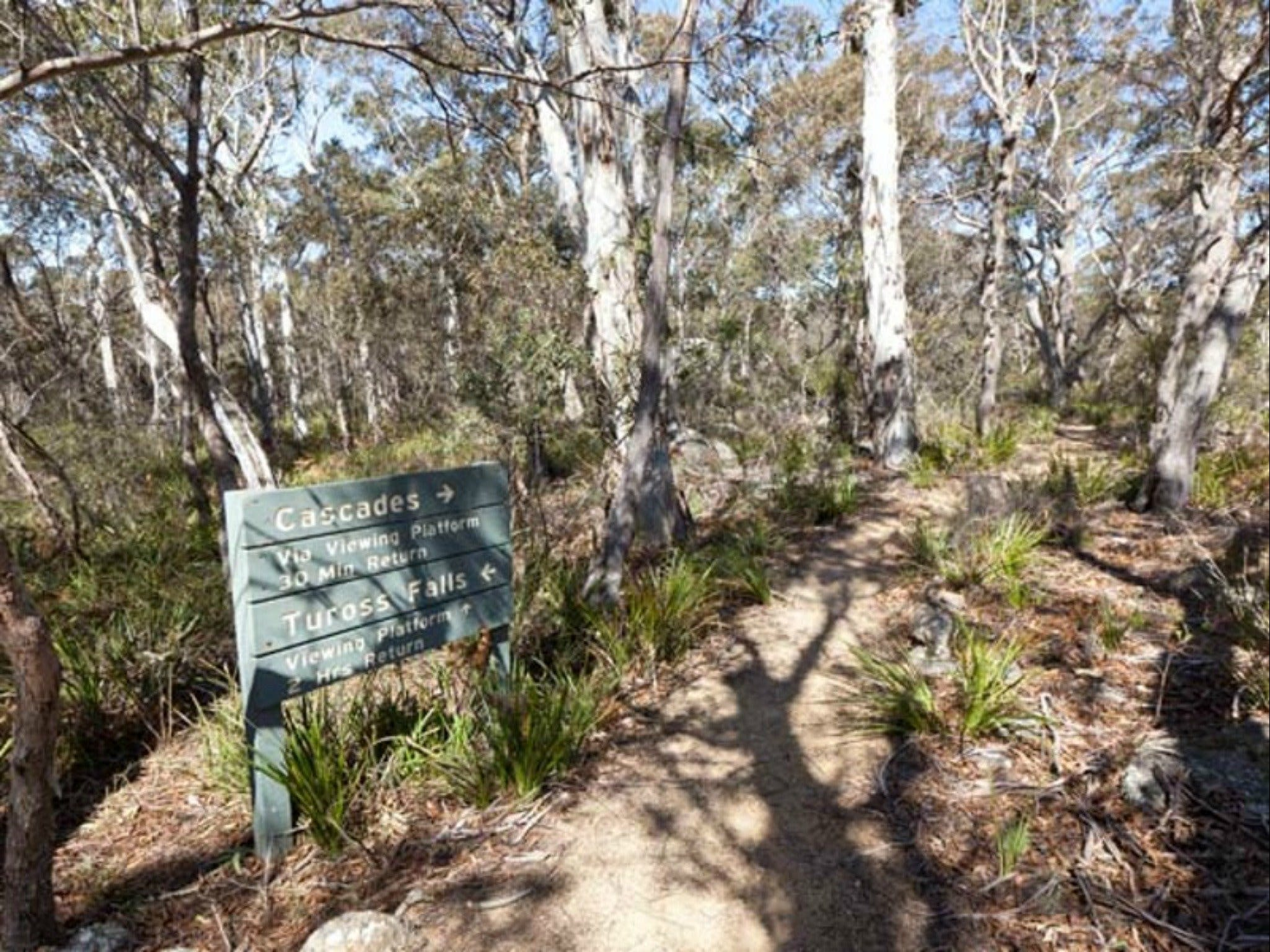 Cascades walking track and viewing platform - Accommodation Noosa