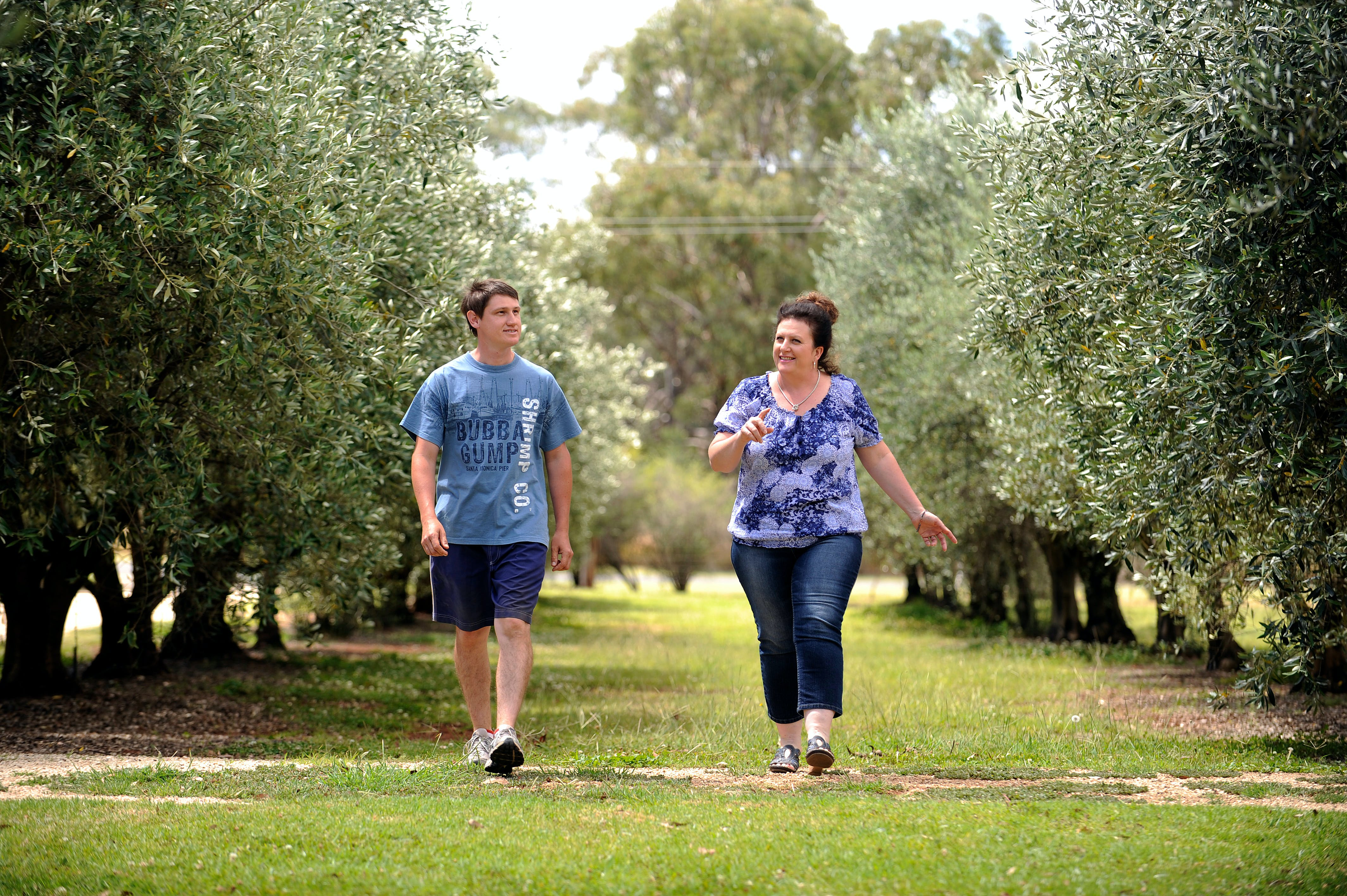 Olives of Beaulieu - Accommodation Noosa