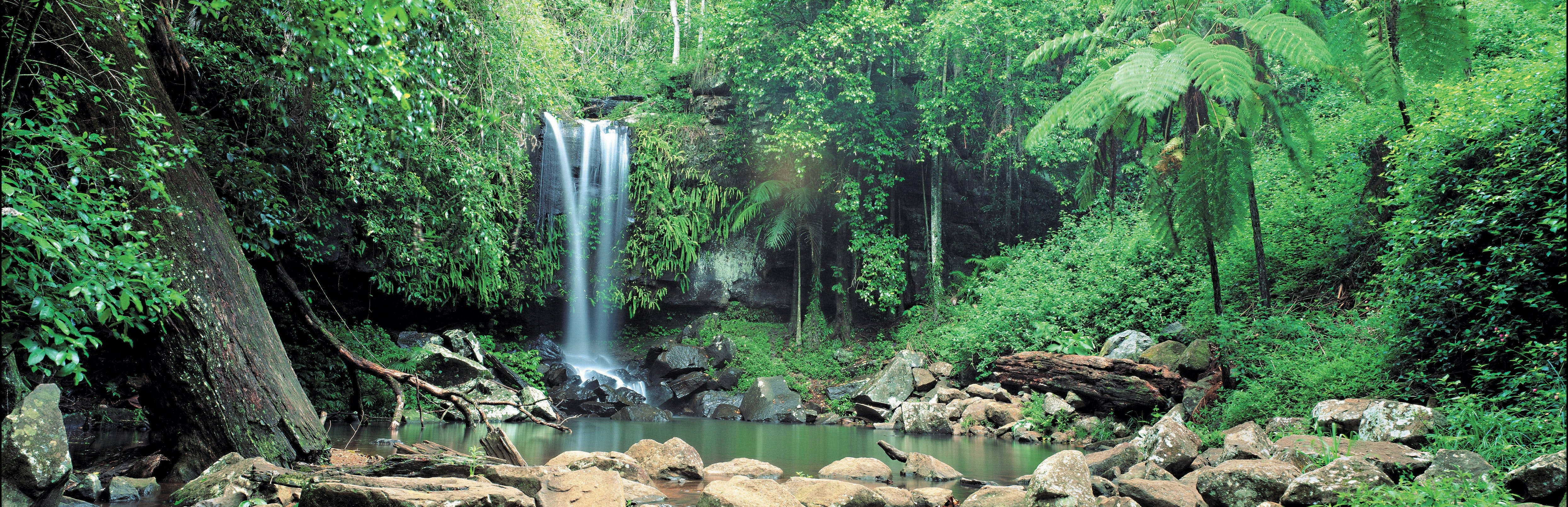 Tamborine National Park - Accommodation Noosa