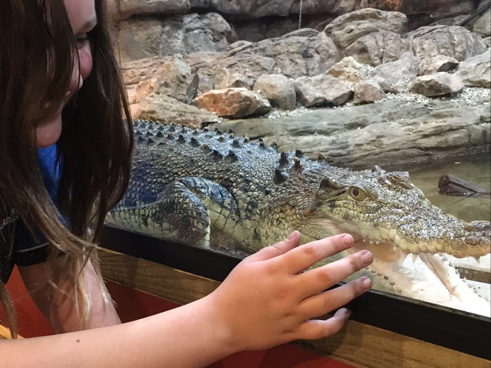 Canberra Reptile Zoo - Accommodation Noosa