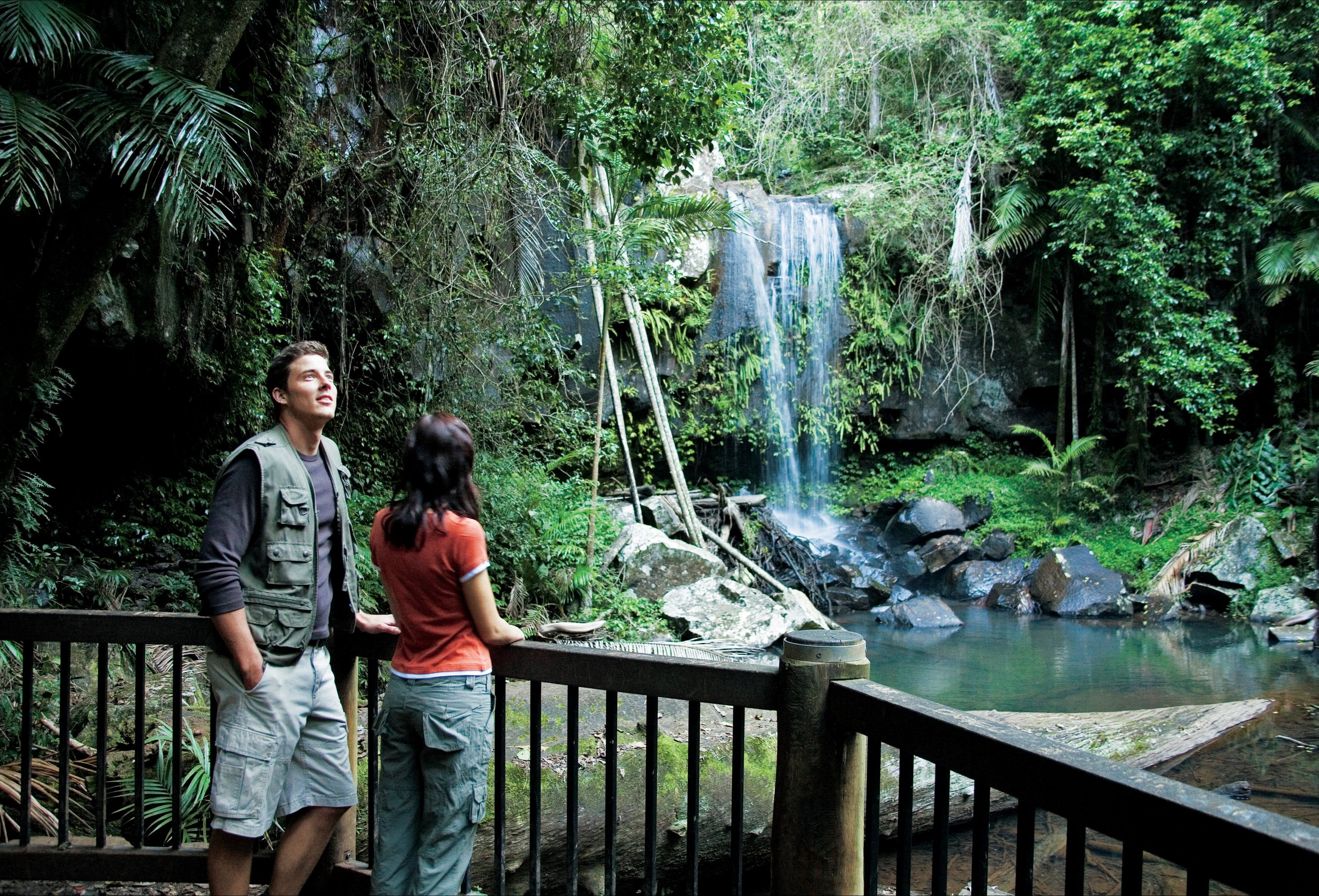 Curtis Falls track Tamborine National Park - Accommodation Noosa