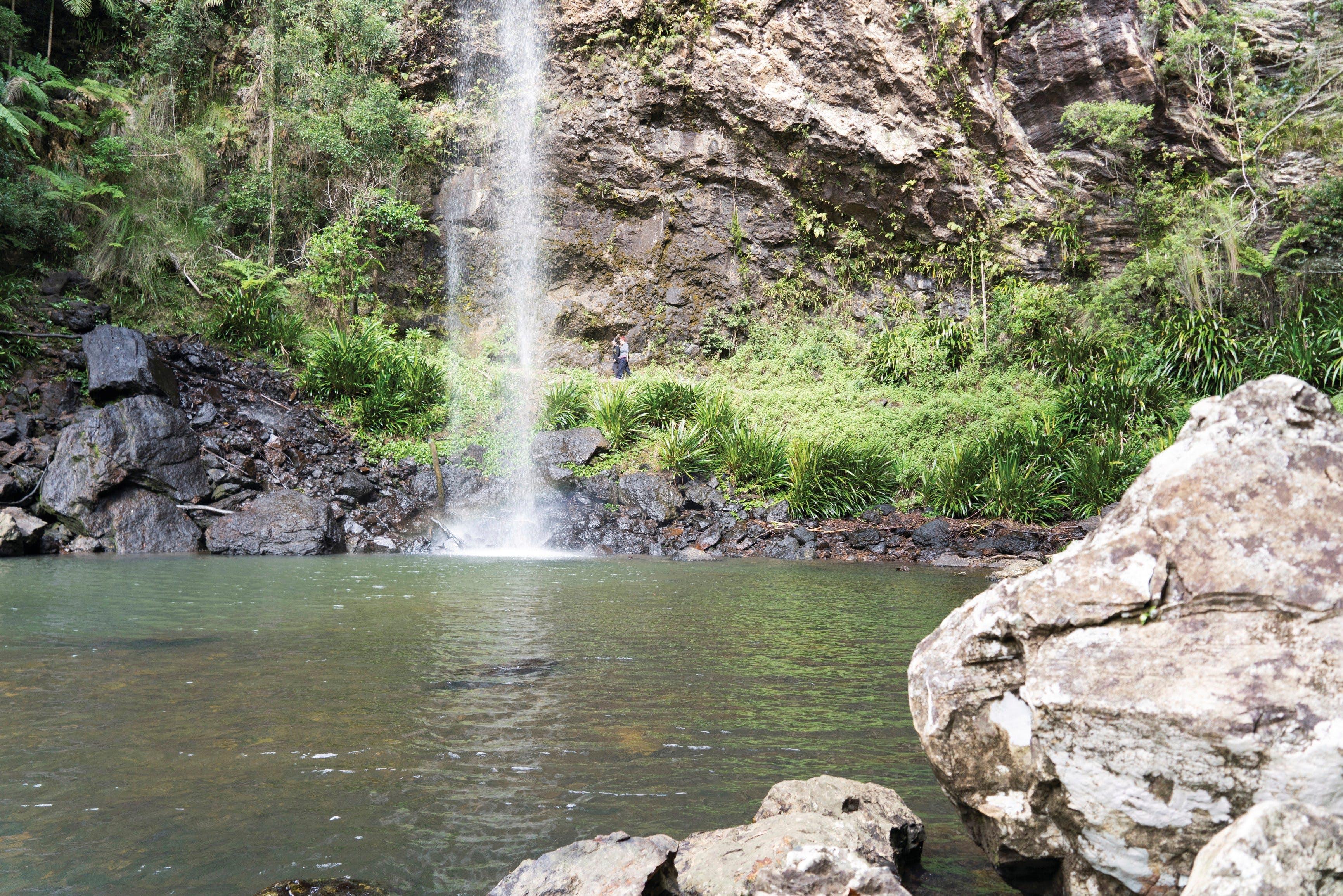 Twin Falls Circuit Springbrook National Park - Accommodation Noosa