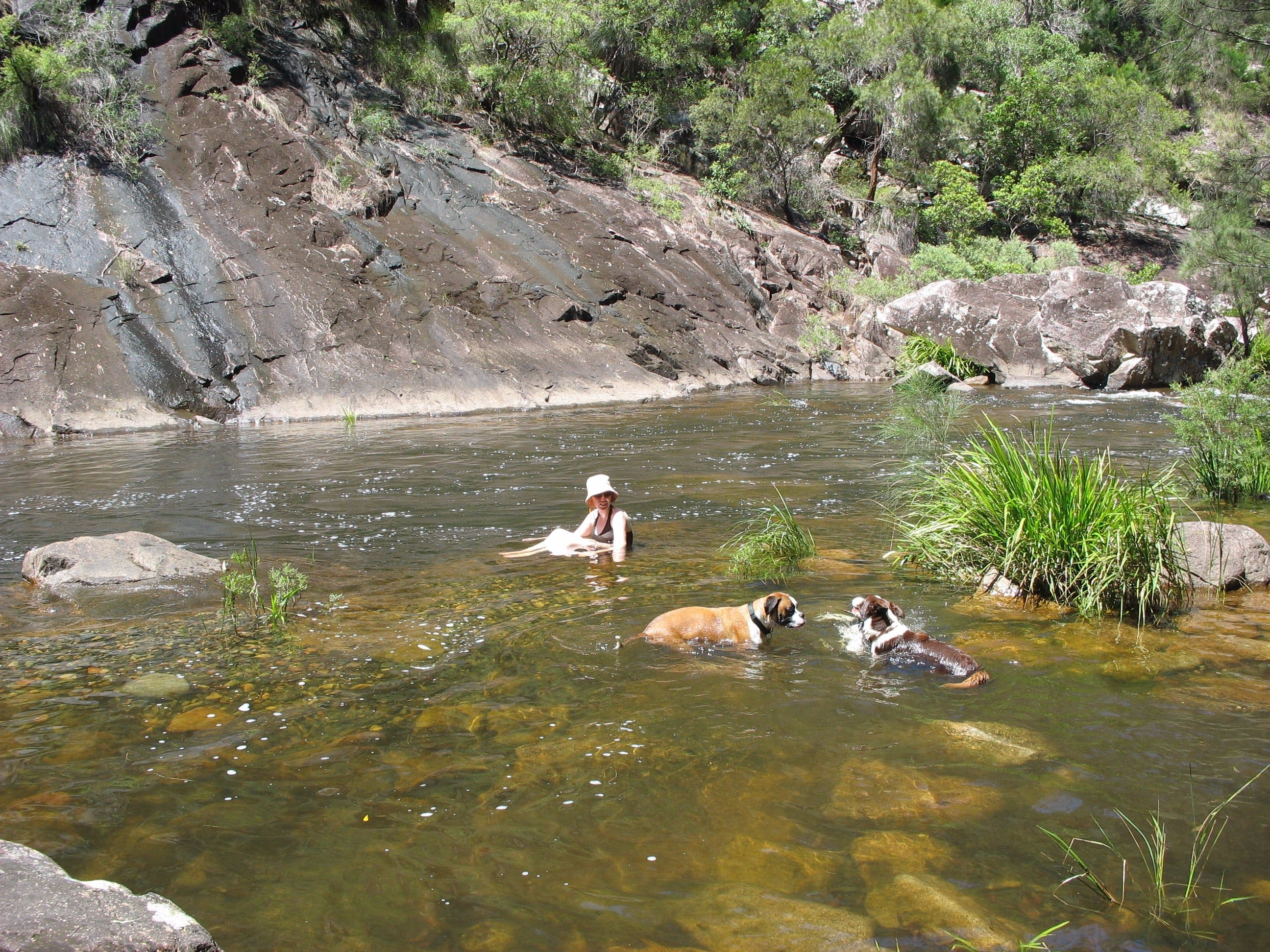 Mount Boss State Forest - Accommodation Noosa