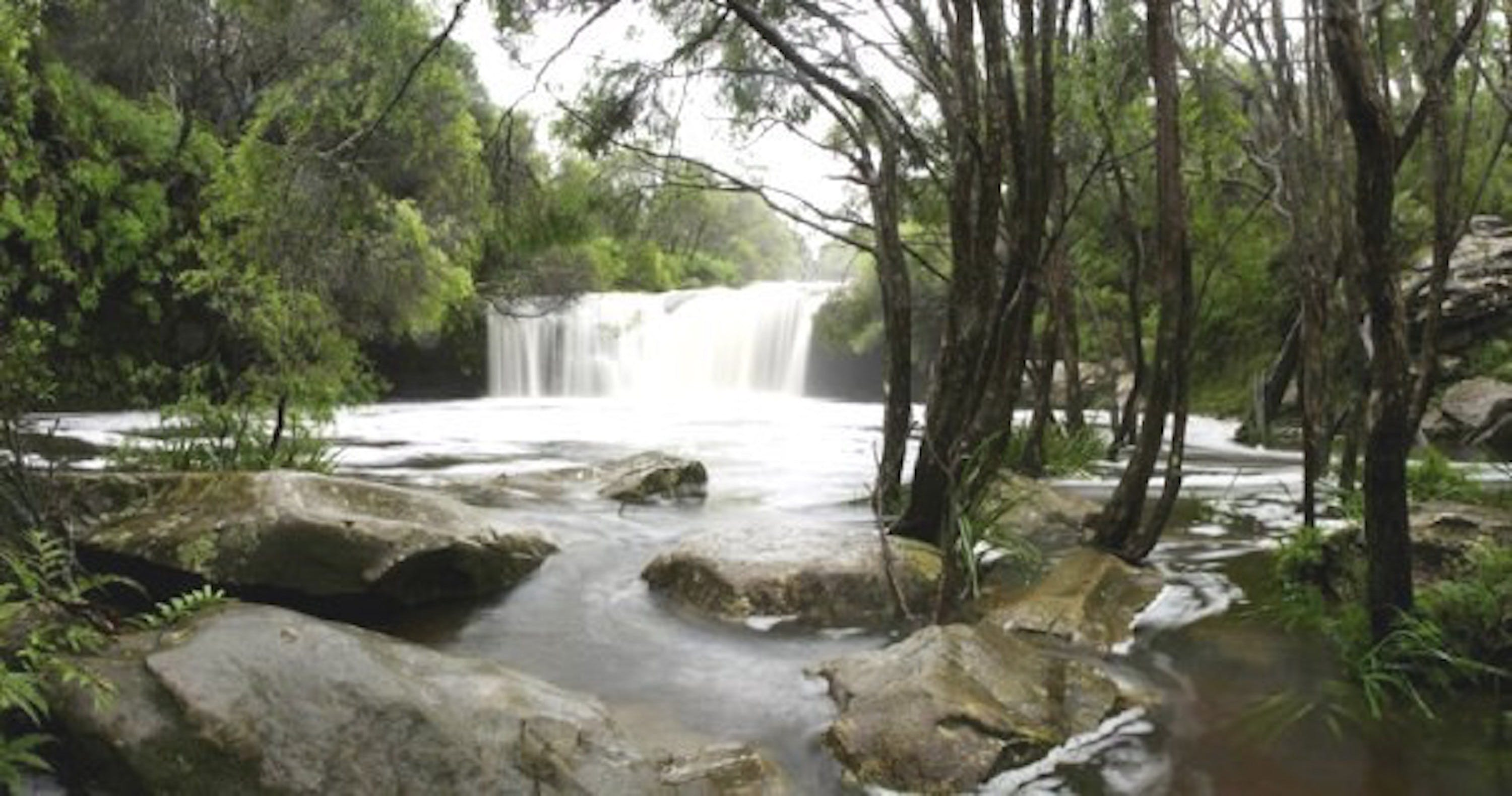Nellies Glen Carrington Falls - Accommodation Noosa