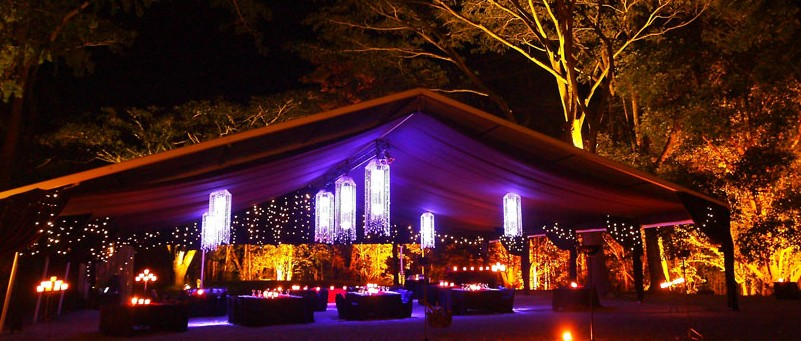 Flames Of The Forest - Accommodation Noosa