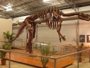 Australia's Dinosaur Trail - Accommodation Noosa