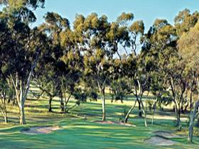 Tanunda Pines Golf Club - Accommodation Noosa