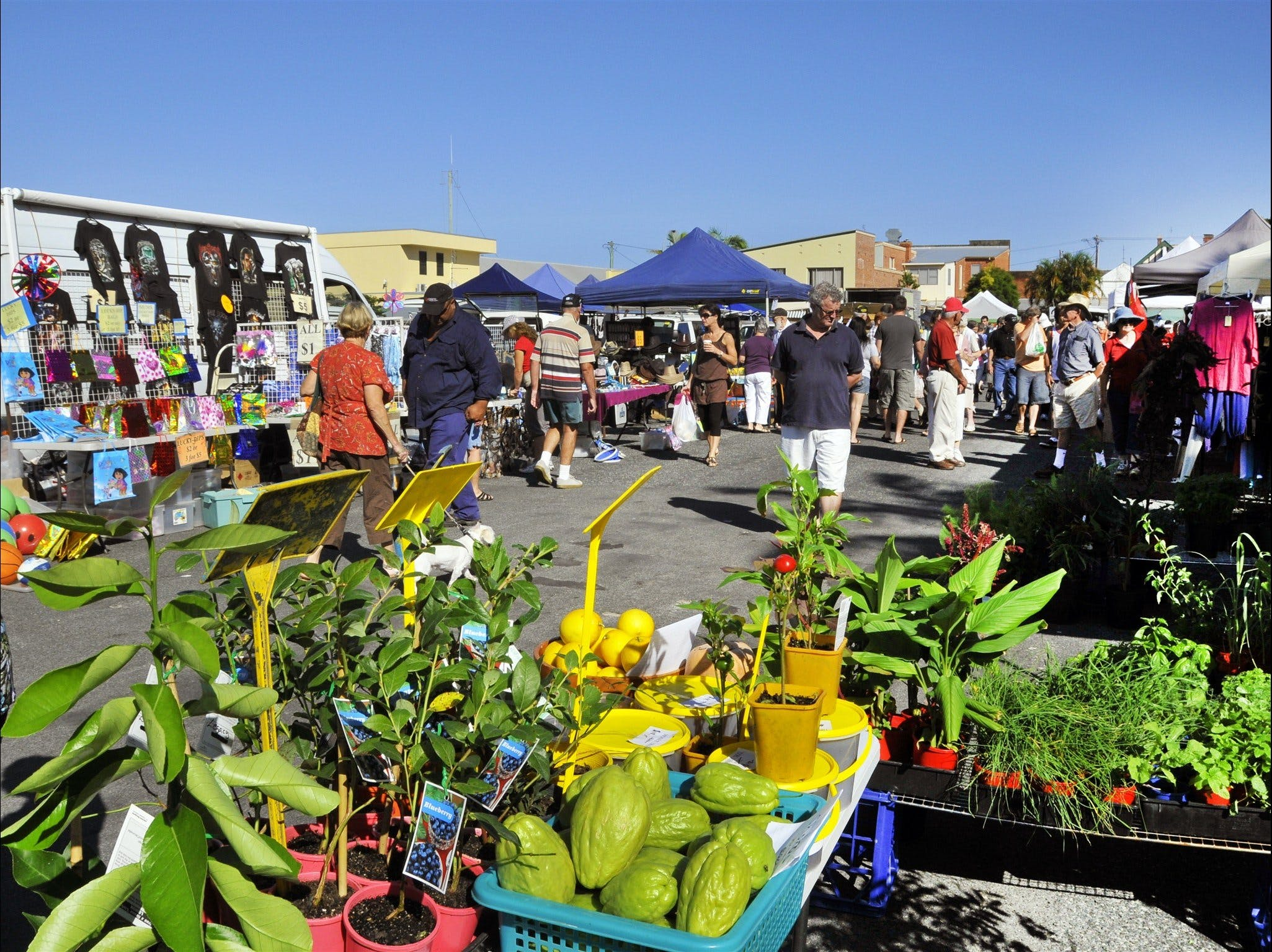 Maclean Community Monthly Markets - Accommodation Noosa