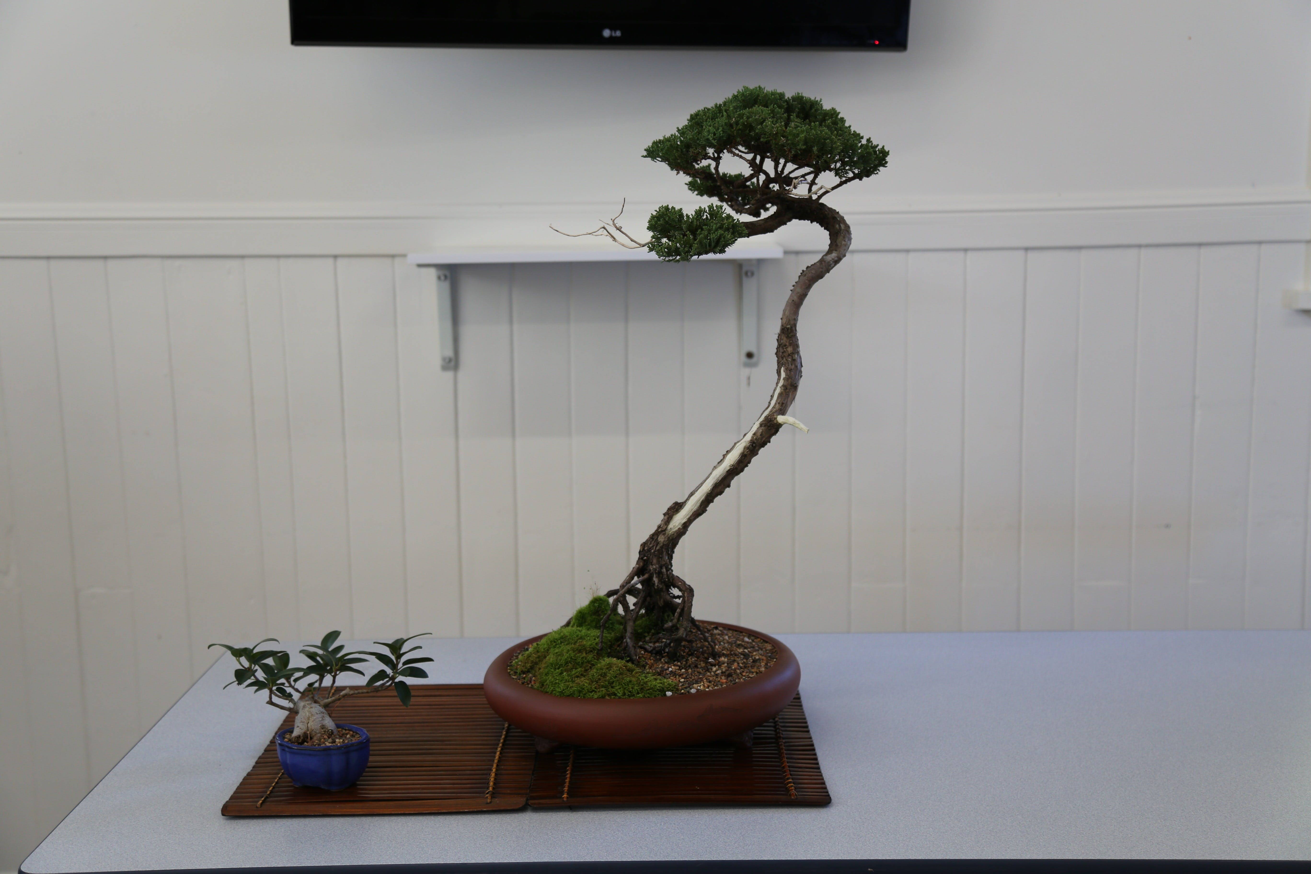 Wauchope Bonsai Workshop Group - Accommodation Noosa