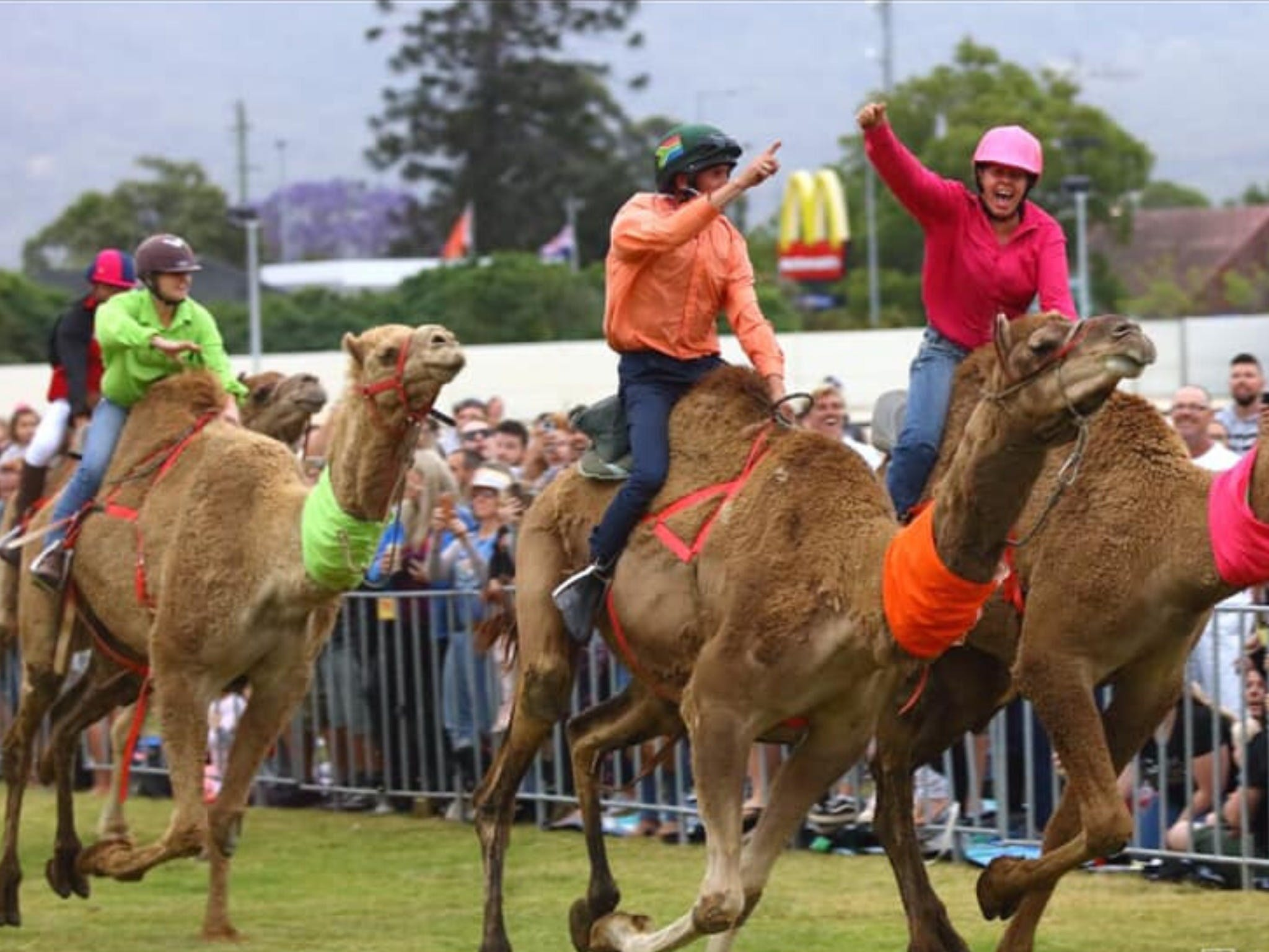 Camel Races at Penrith Paceway - Accommodation Noosa
